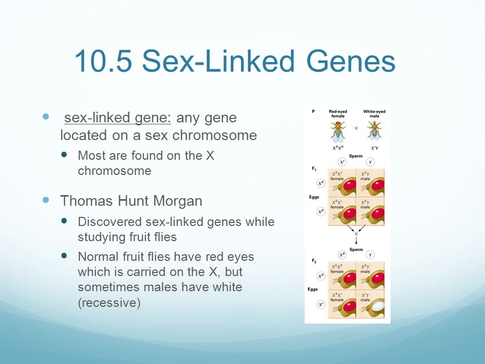 Any gene located on a sex chromosome