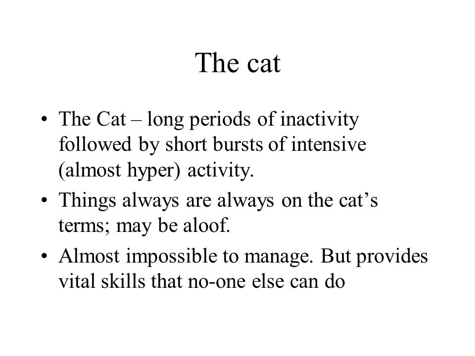 The cat The Cat – long periods of inactivity followed by short bursts of intensive (almost hyper) activity.