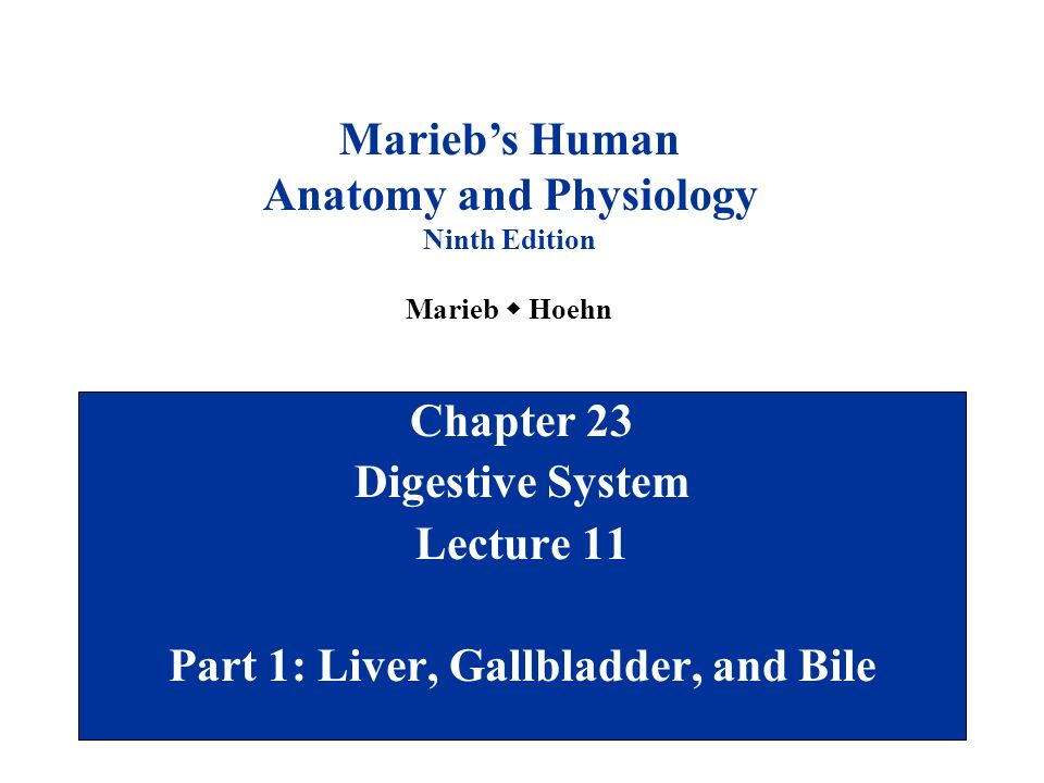 Anatomy and Physiology Part 1: Liver, Gallbladder, and Bile - ppt ...