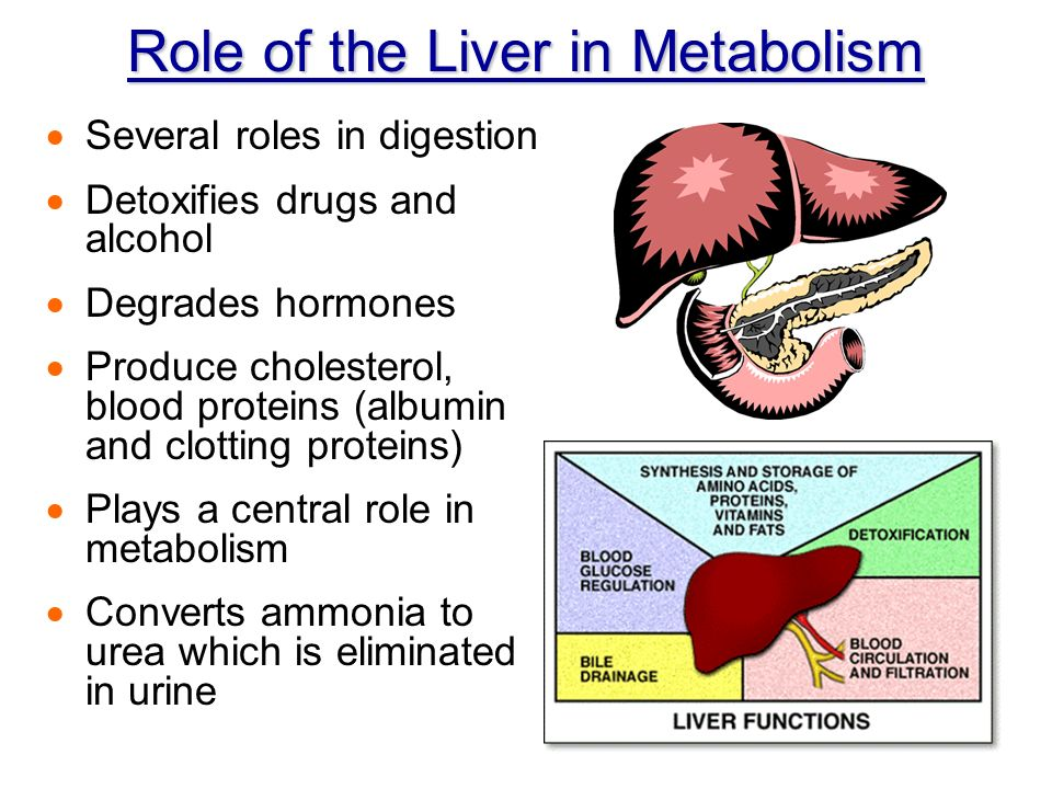 All About Heart Health Cholesterol Amp Functions Of The Liver