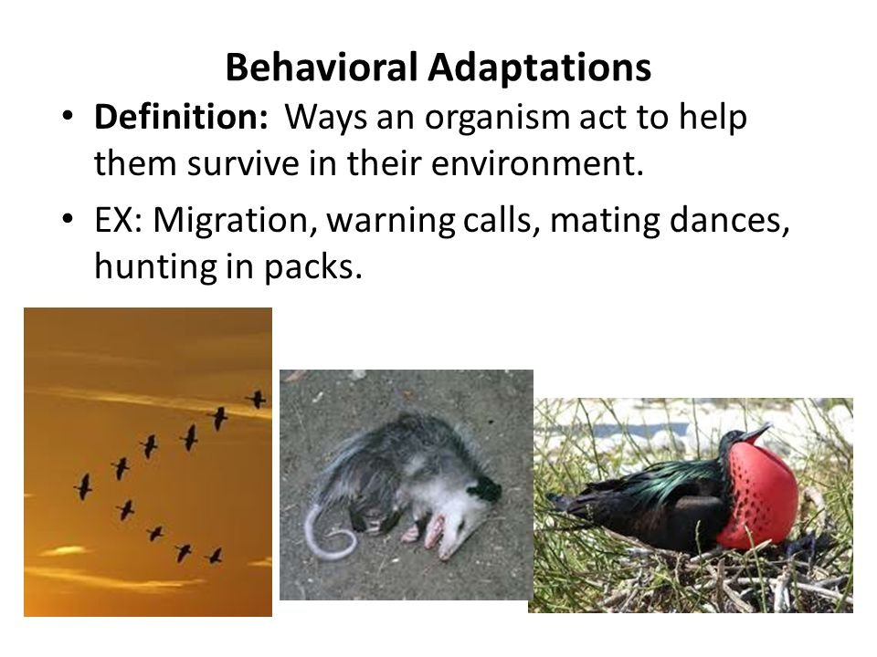 Types Of Adaptations Notes Assignment Ppt Video Online Download