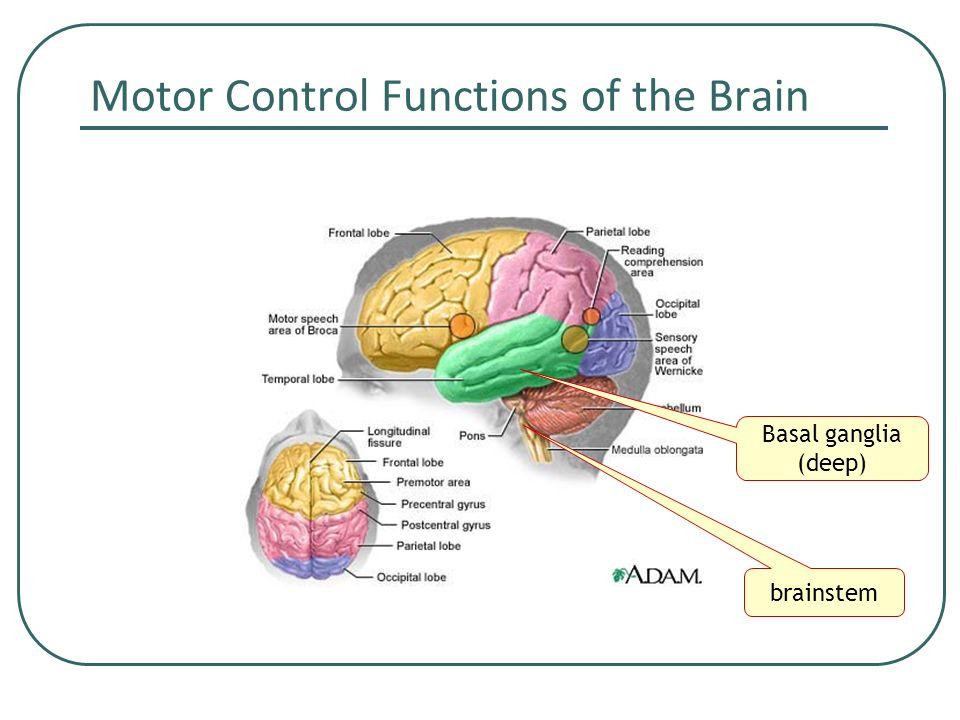 Brain Diagram Motor Control Block And Schematic Diagrams