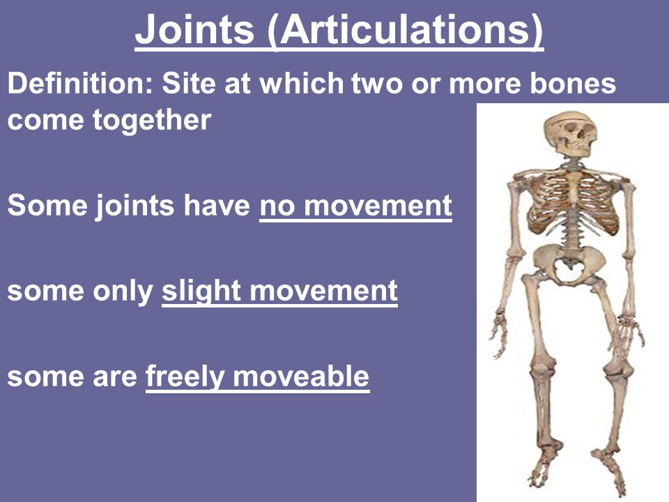 Joints (Articulations) - ppt download