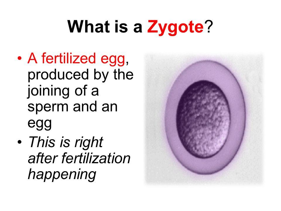 Diagram of sperm fertilizing an egg altered sex pics