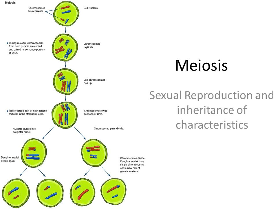 Sexual reproduction and genetics ppt