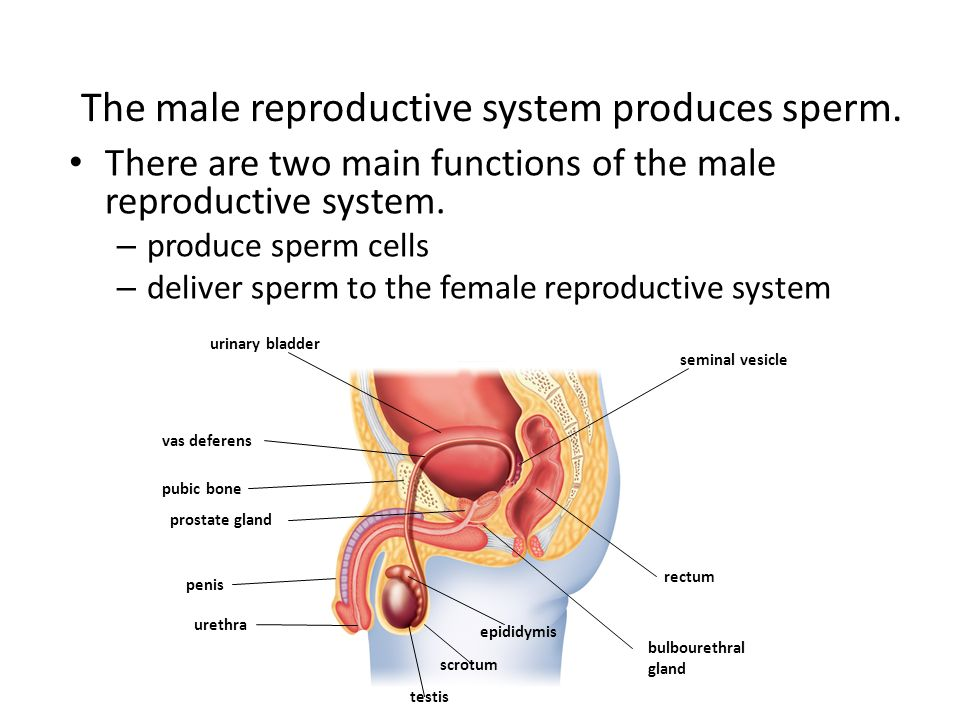 Reproduction and Development - ppt video online download