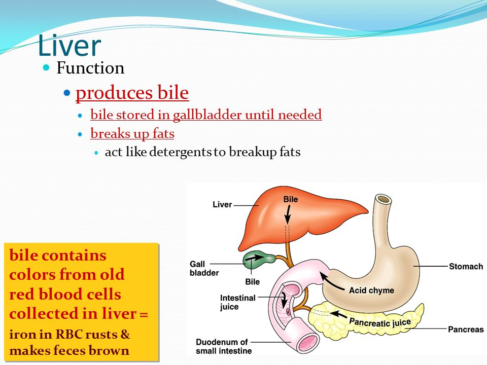 61 Digestion Ppt Video Online Download