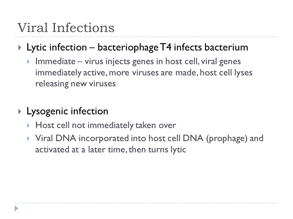 Viral Infections Lytic infection – bacteriophage T4 infects bacterium