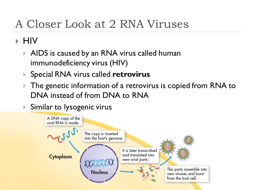 A Closer Look at 2 RNA Viruses