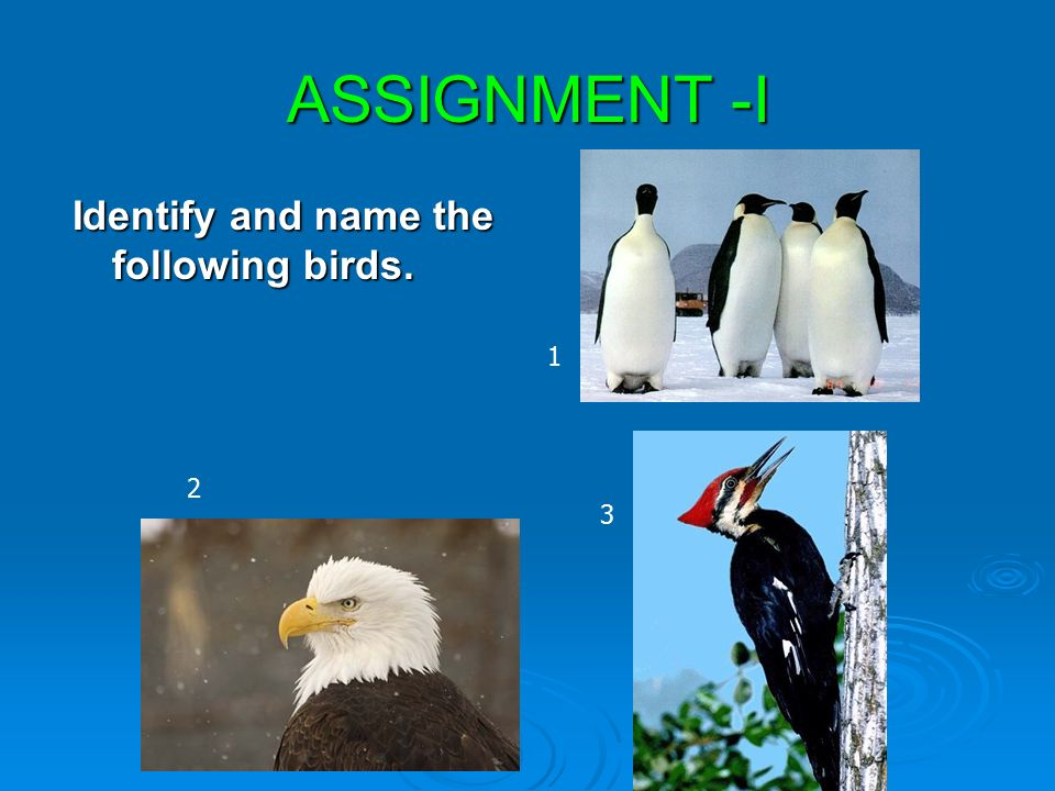 CLASS III EVS LESSON 8 FLYING HIGH P RAMANI  - ppt video