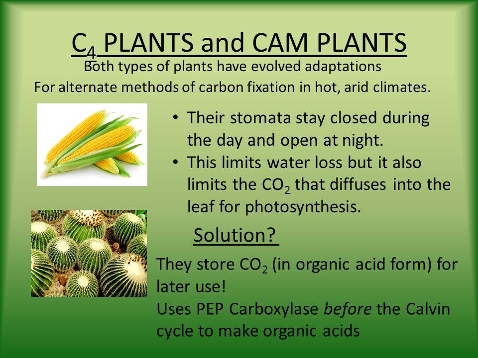 C3 Plants C4 Plants Cam Plants Heterotrophic Plants Ppt Video