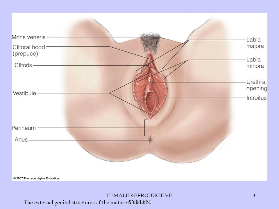 Luxury Anatomy Of Female Reproductive System Video Pattern - Anatomy ...
