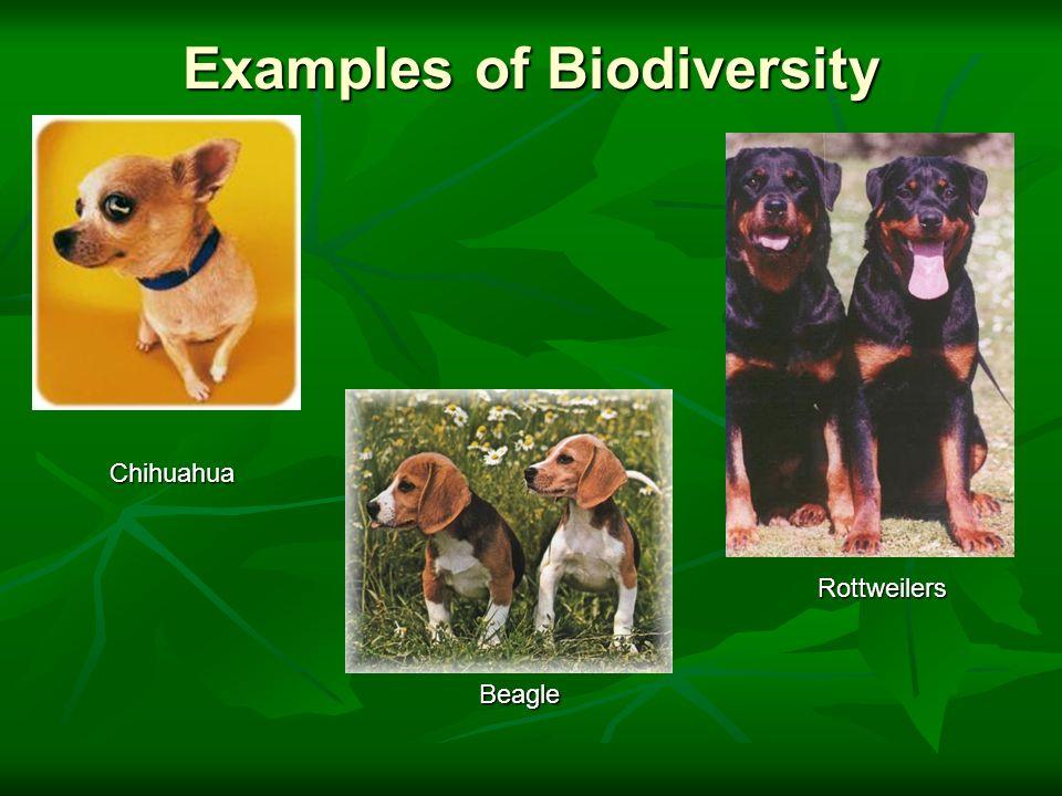 Biodiversity Ppt Video Online Download
