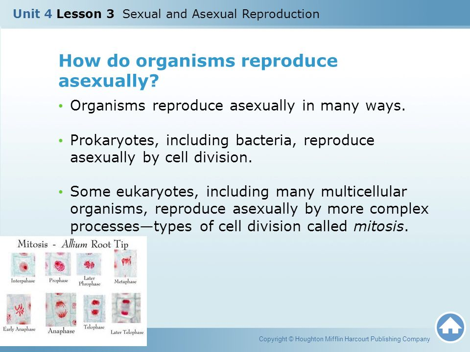How does bacteria reproduce asexually