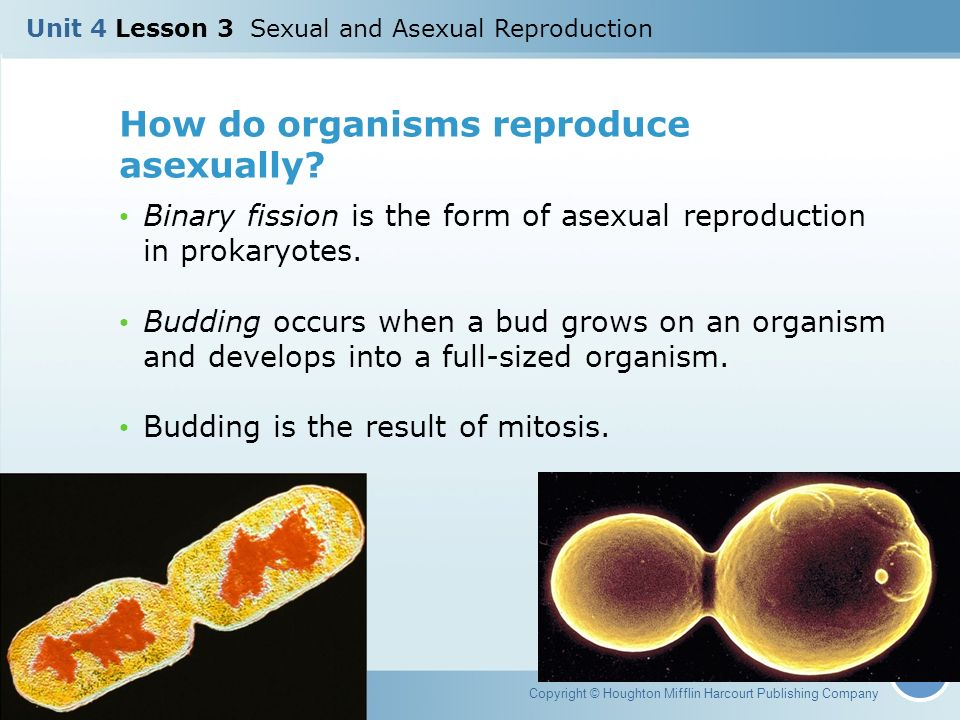 Prokaryotic reproduction budding asexual reproduction