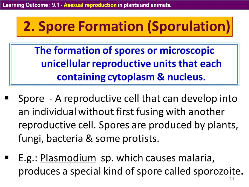 Sporulation asexual reproduction worksheets