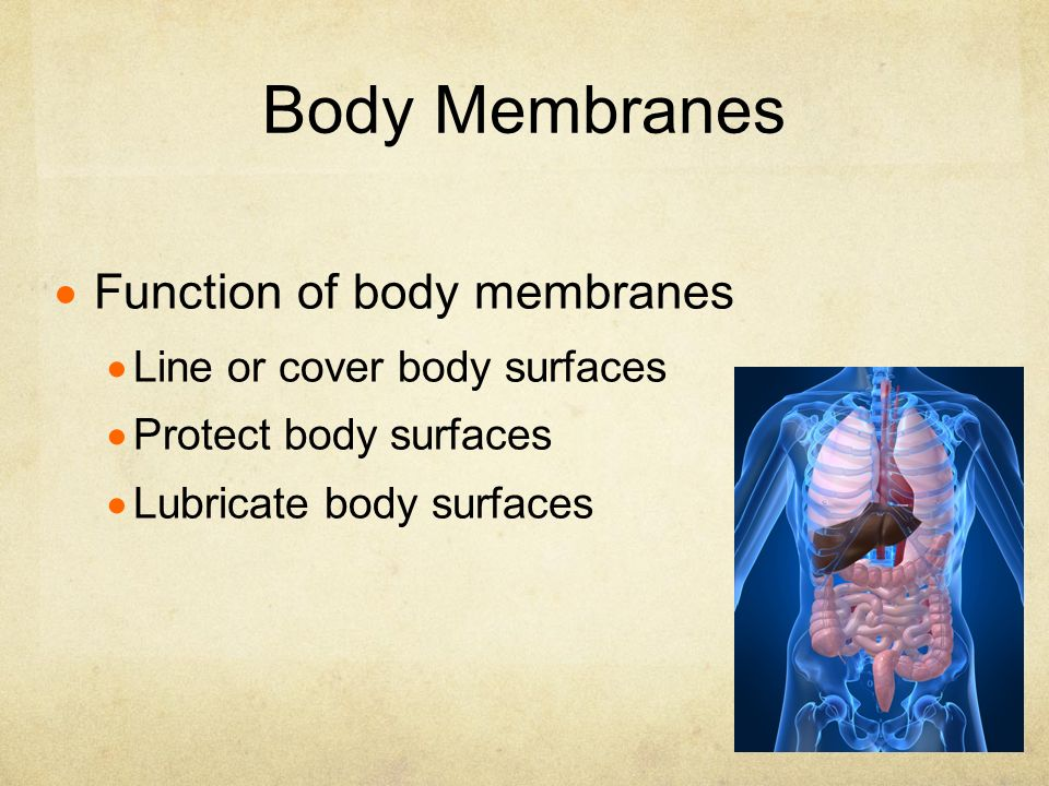 Chapter 4 Skin Body Membranes Ppt Download