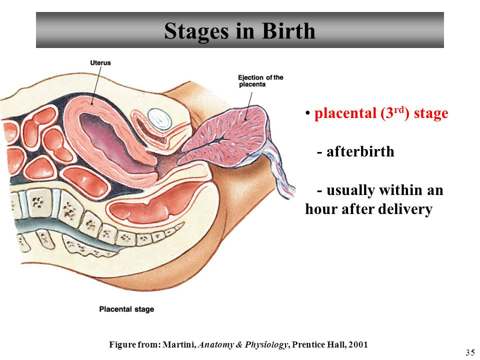 Chapter 28 Pregnancy, Growth, & Development Lecture ppt download