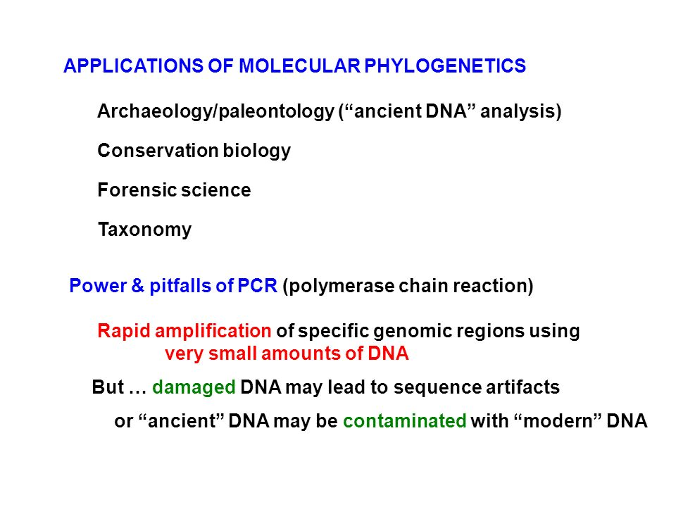APPLICATIONS OF MOLECULAR PHYLOGENETICS - ppt download