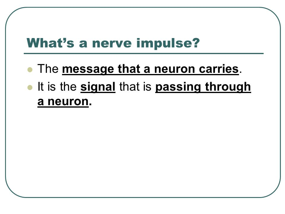 What's a nerve impulse The message that a neuron carries.