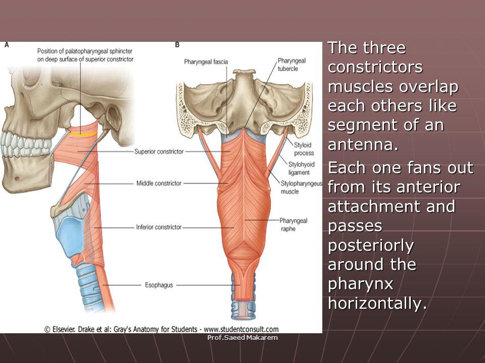 PHARYNX Pharynx Prof .Saeed Makarem. - ppt video online download