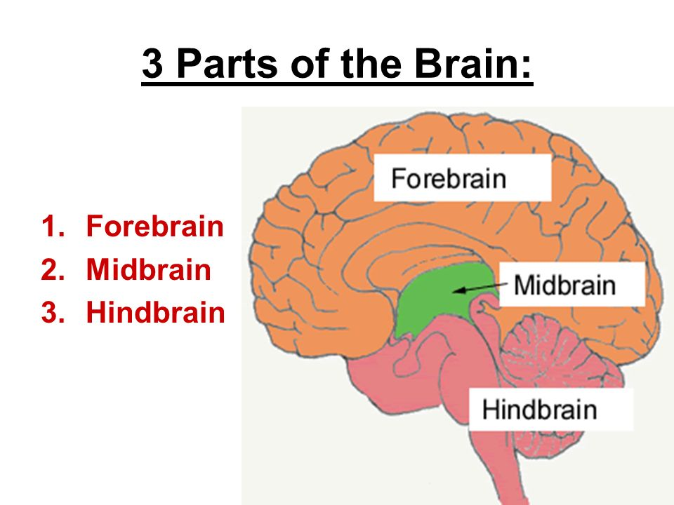 Simple and straightforward guide to the brain that explains all functions