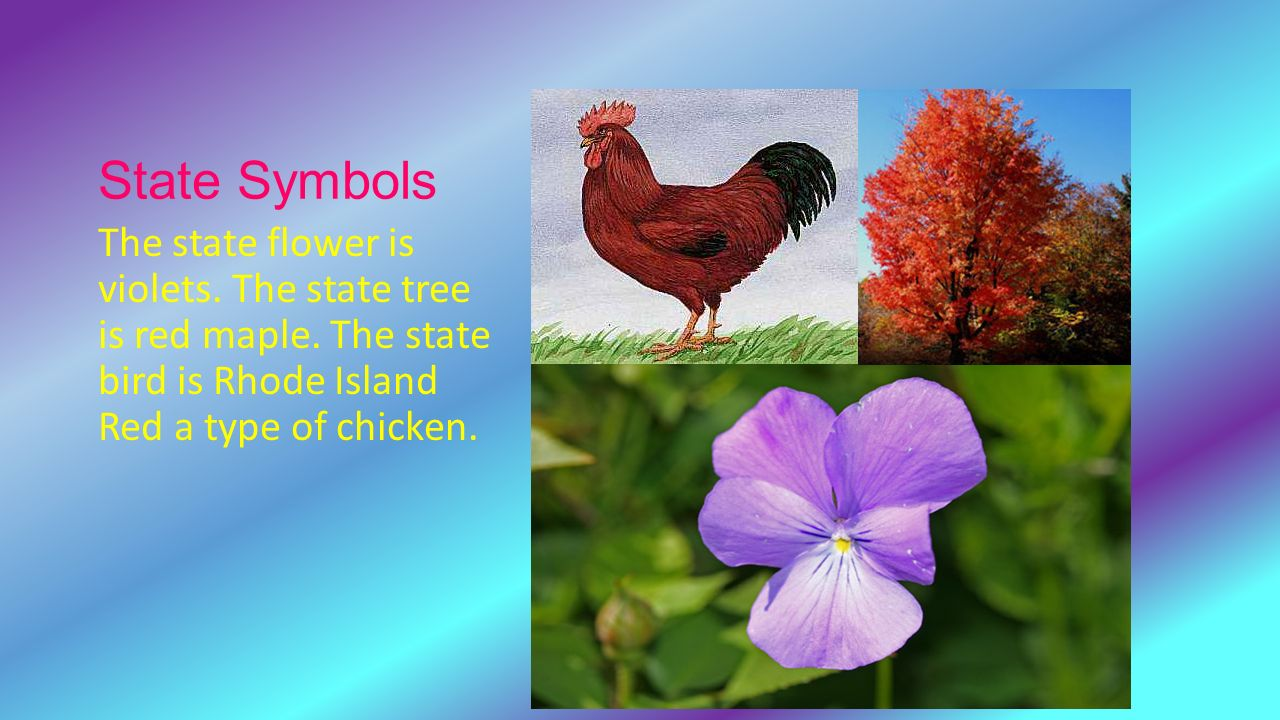 rhode island state flower tree and bird flowers healthy