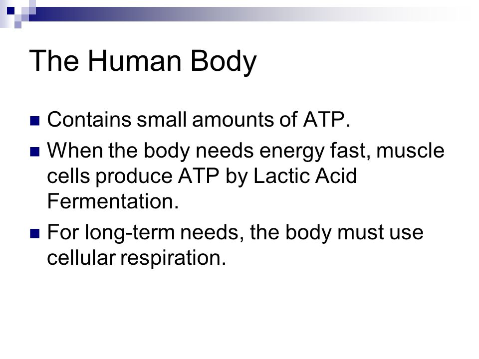 The Human Body Contains small amounts of ATP.