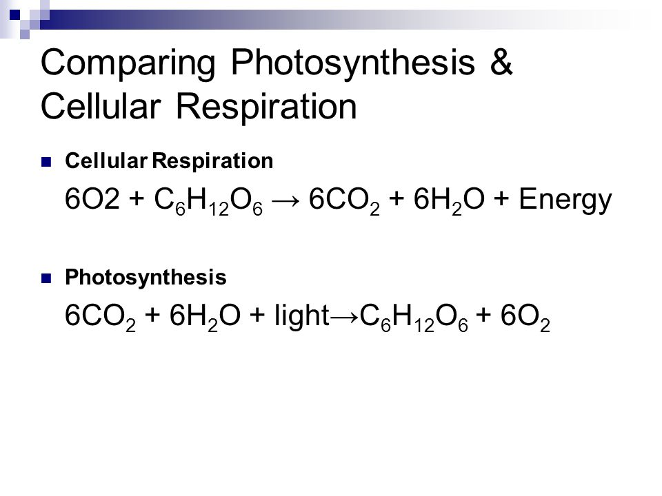Comparing Photosynthesis & Cellular Respiration