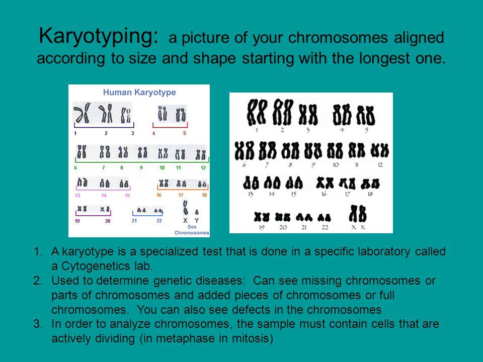 Gene Technology Karyotyping Genetic Engineering Ppt Video