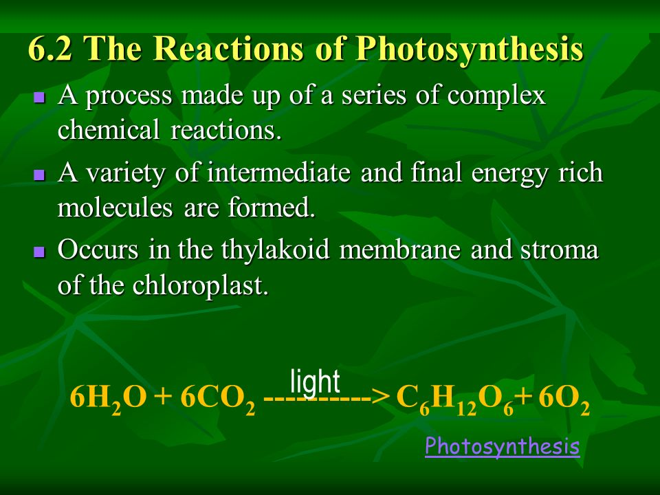 Biology 20 Unit C Chapter 6 Photosynthesis Ppt Download