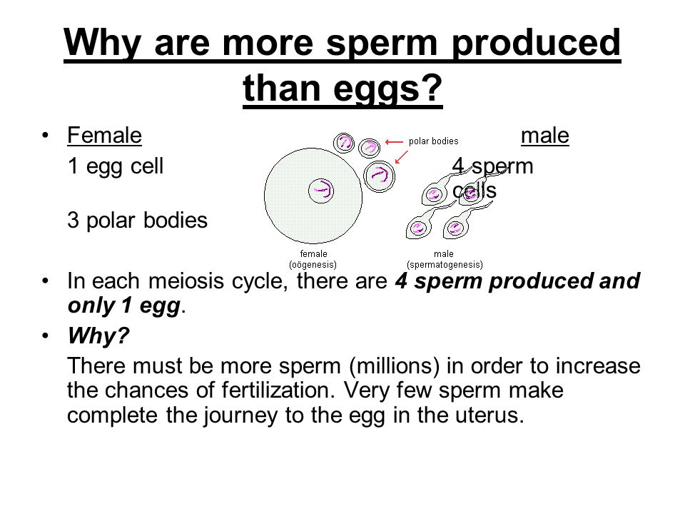 About and production egg Truth sperm