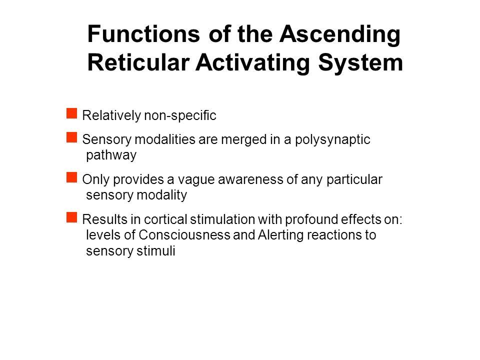 Reticular Formation Dr. Sam David. - ppt video online download