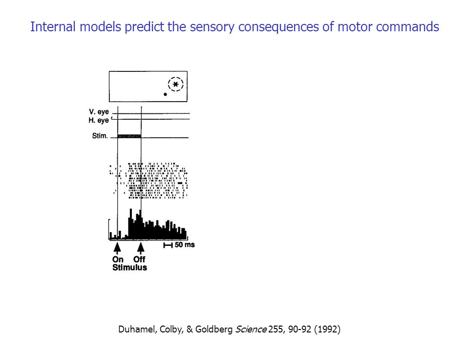 Internal models predict the sensory consequences of motor commands