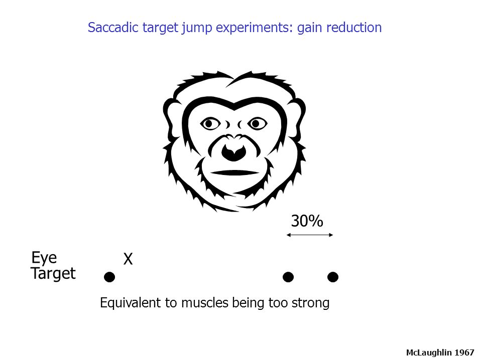 Saccadic target jump experiments: gain reduction