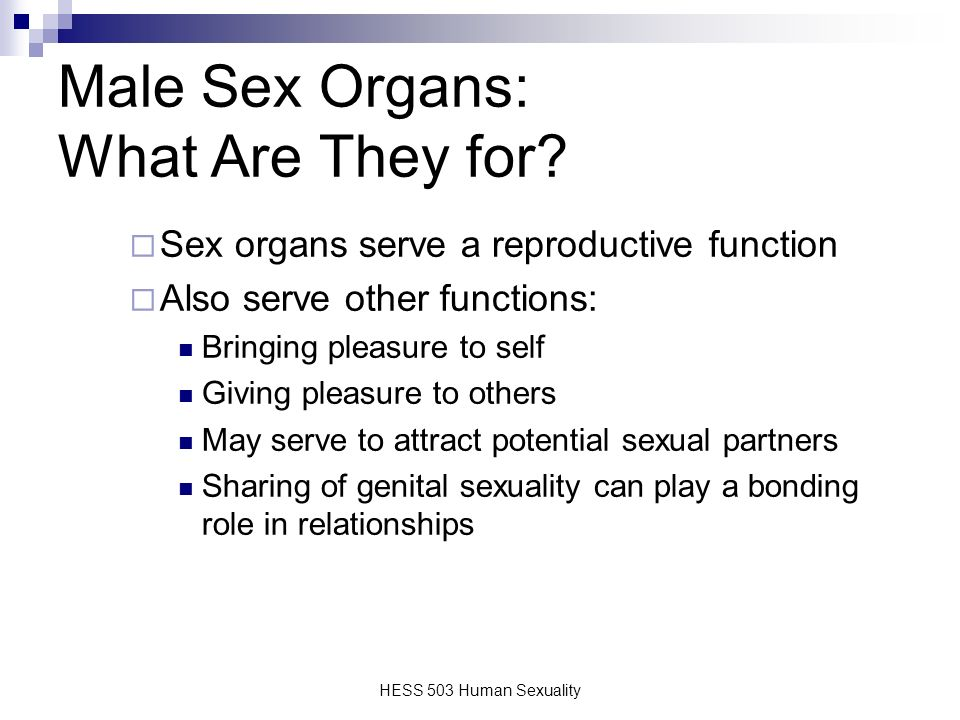 Male Sexual Anatomy Physiology And Response Ppt Video Online