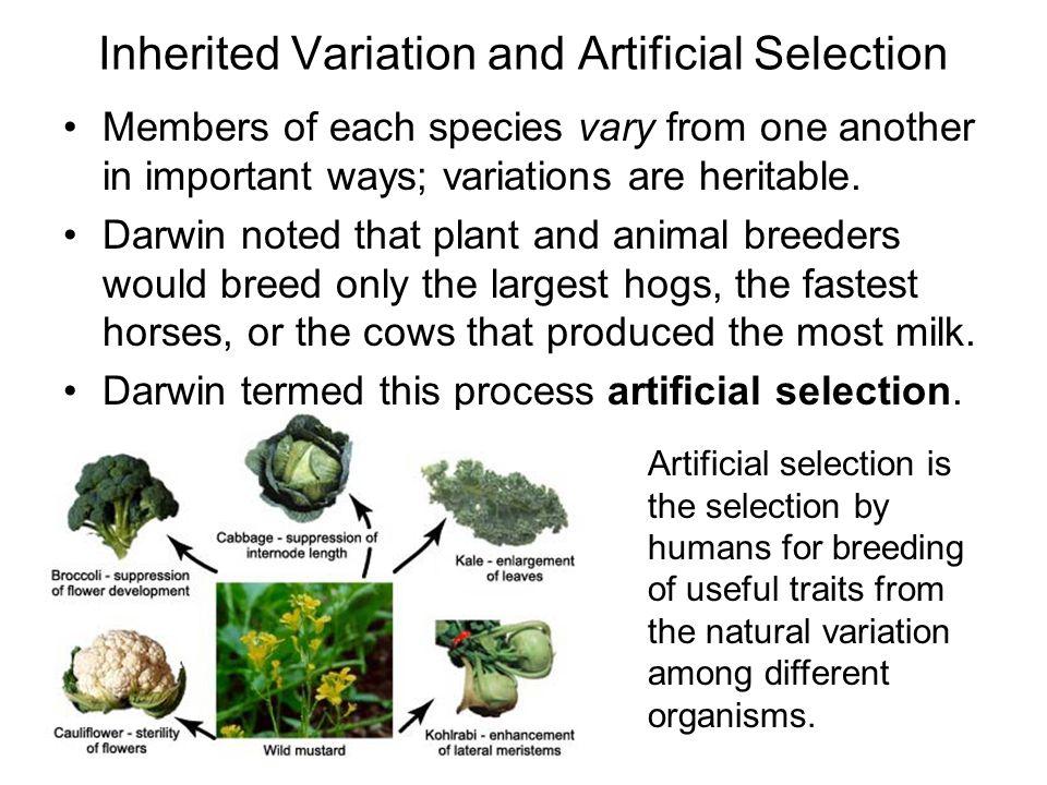 Natural Selection Among Humans