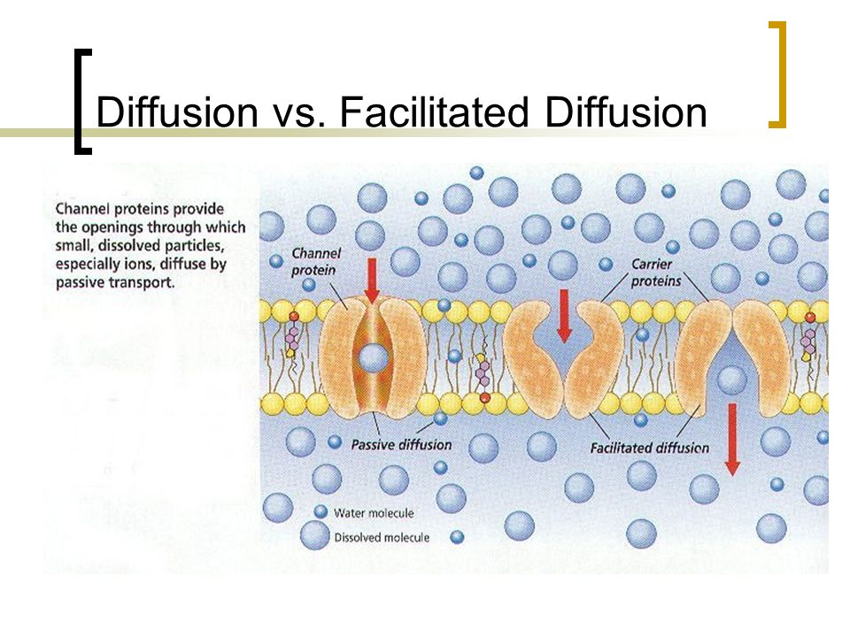 Diffusion vs. Facilitated Diffusion