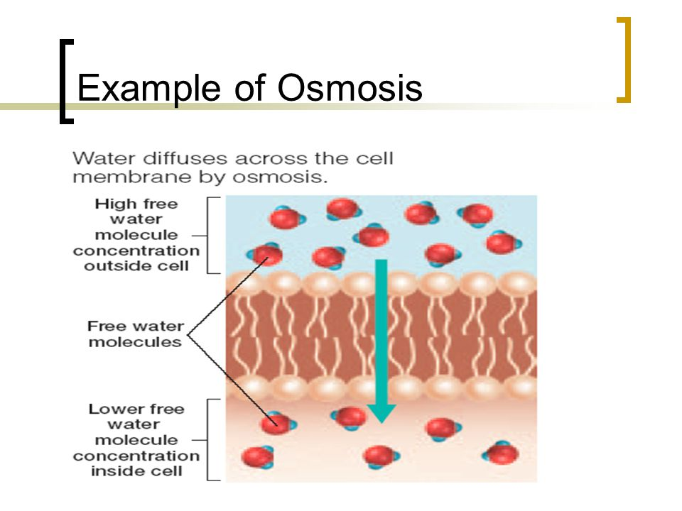 Example of Osmosis