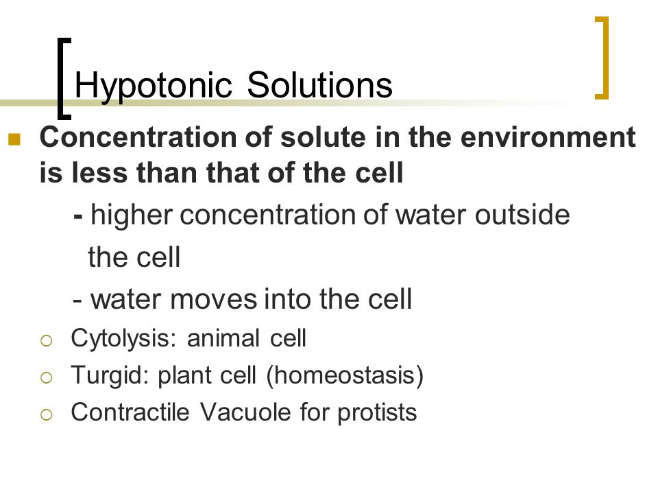 Hypotonic Solutions Concentration of solute in the environment is less than that of the cell. - higher concentration of water outside.