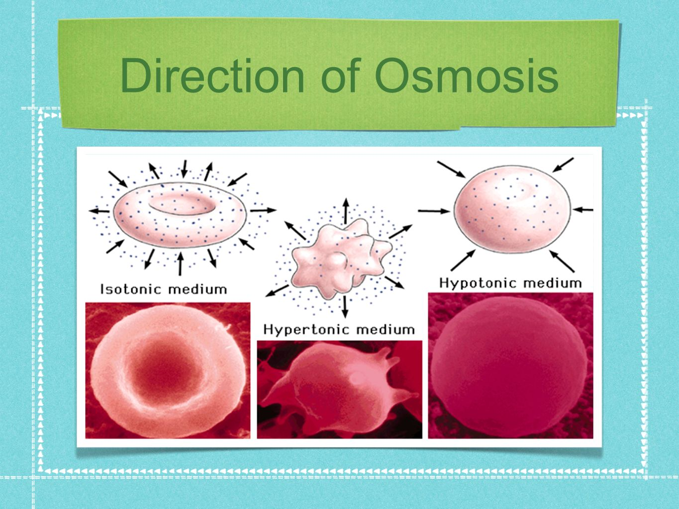 Direction of Osmosis