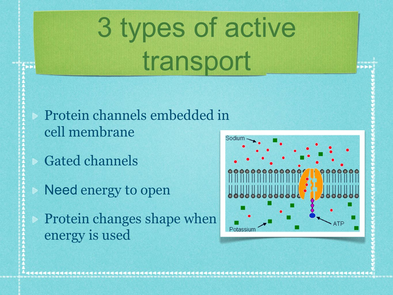 3 types of active transport