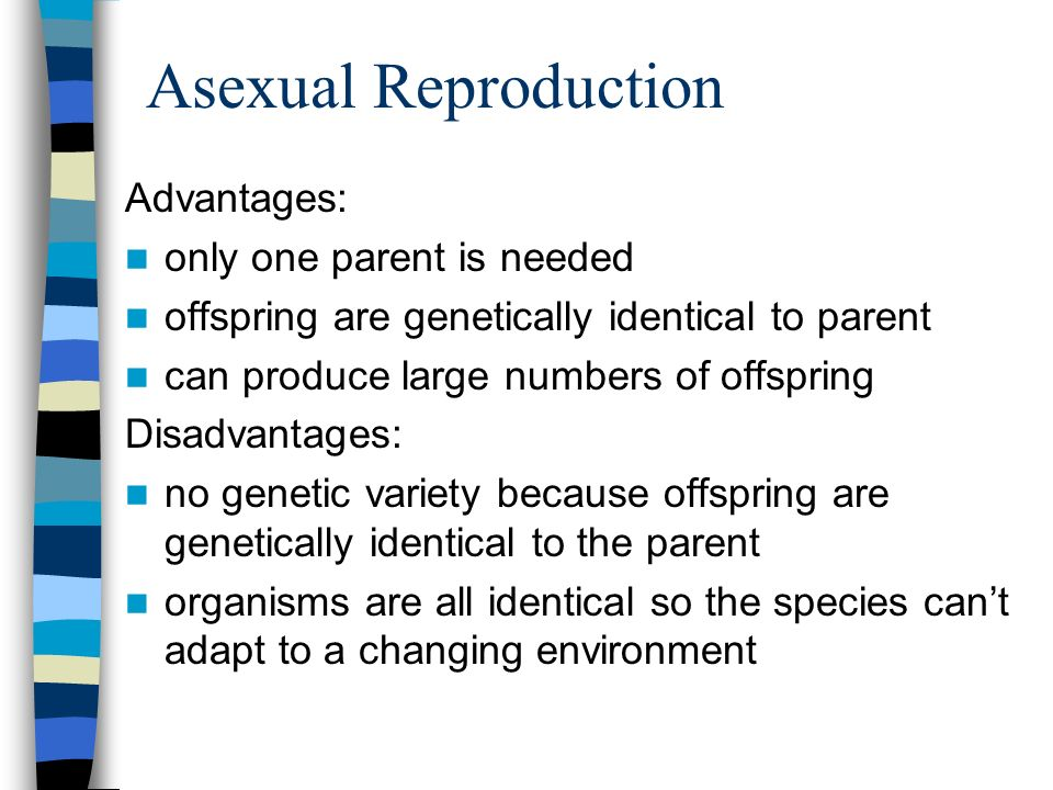 What is one advantage of asexual reproduction