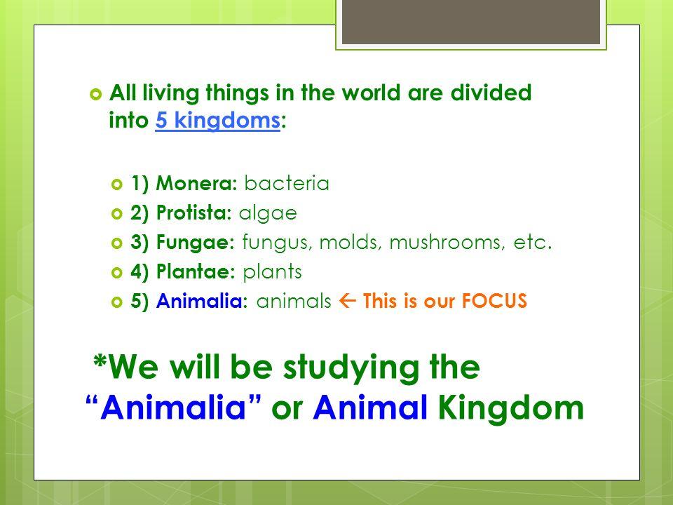 We Will Be Studying The Animalia Or Animal Kingdom