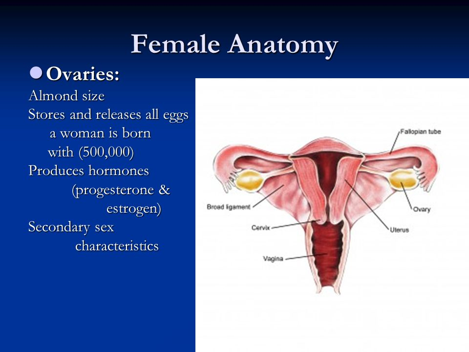 Male & Female Reproductive System - ppt video online download