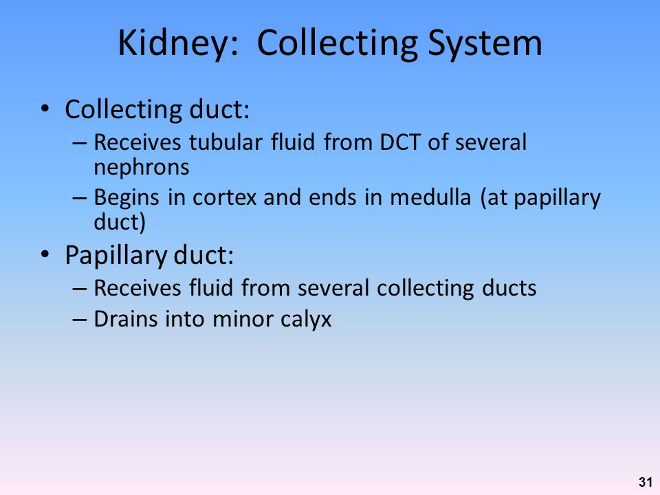 Kidney: Collecting System