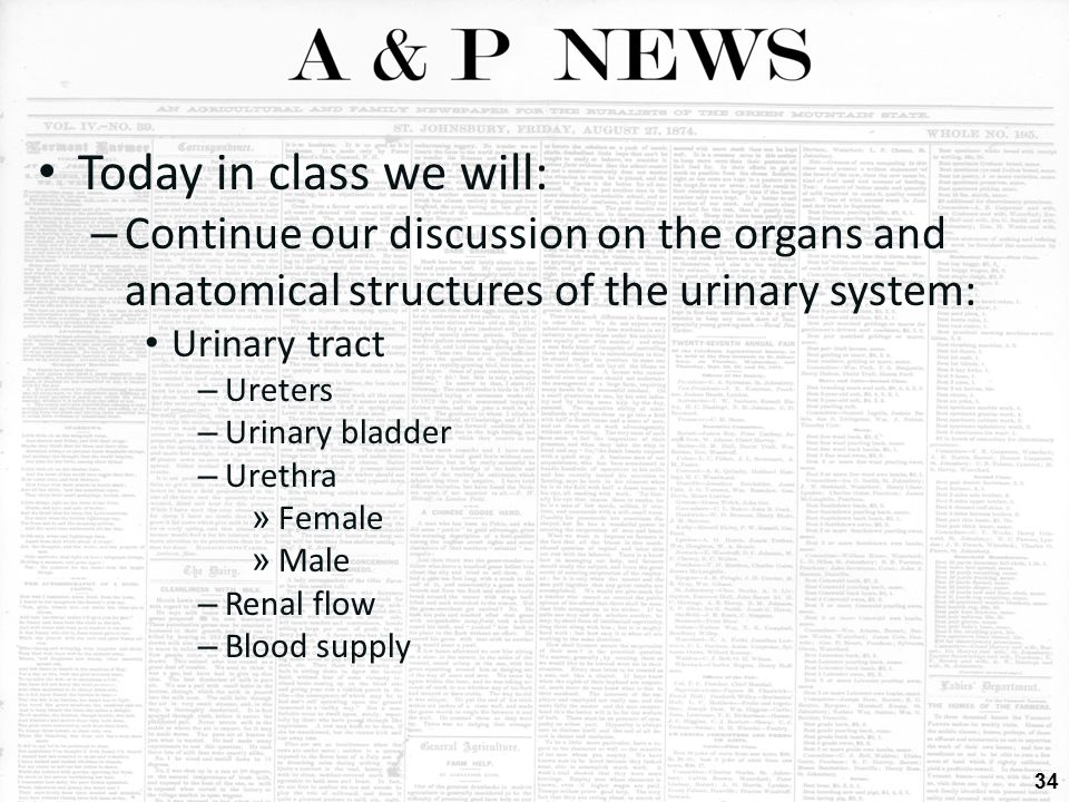 Today in class we will: Continue our discussion on the organs and anatomical structures of the urinary system: