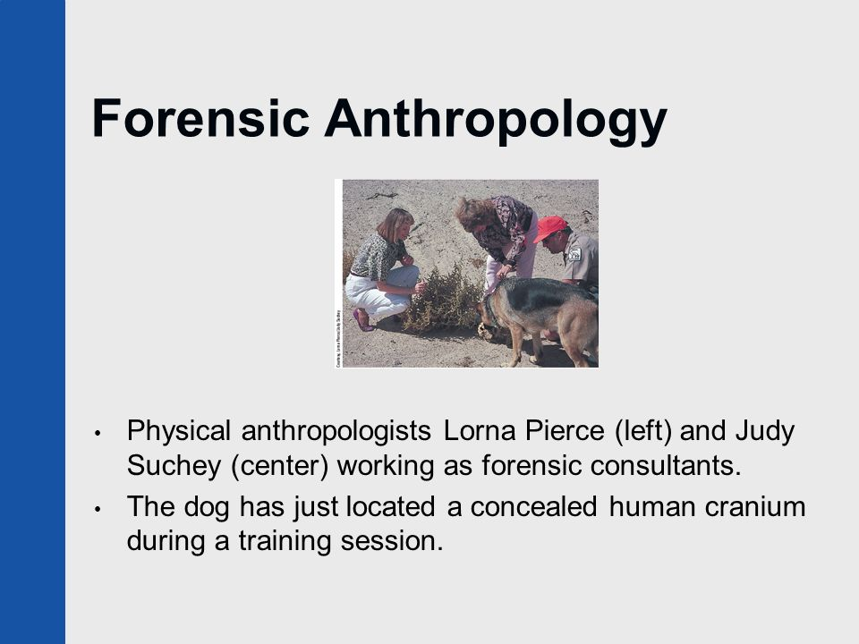 Introduction To Physical Anthropology Ppt Video Online
