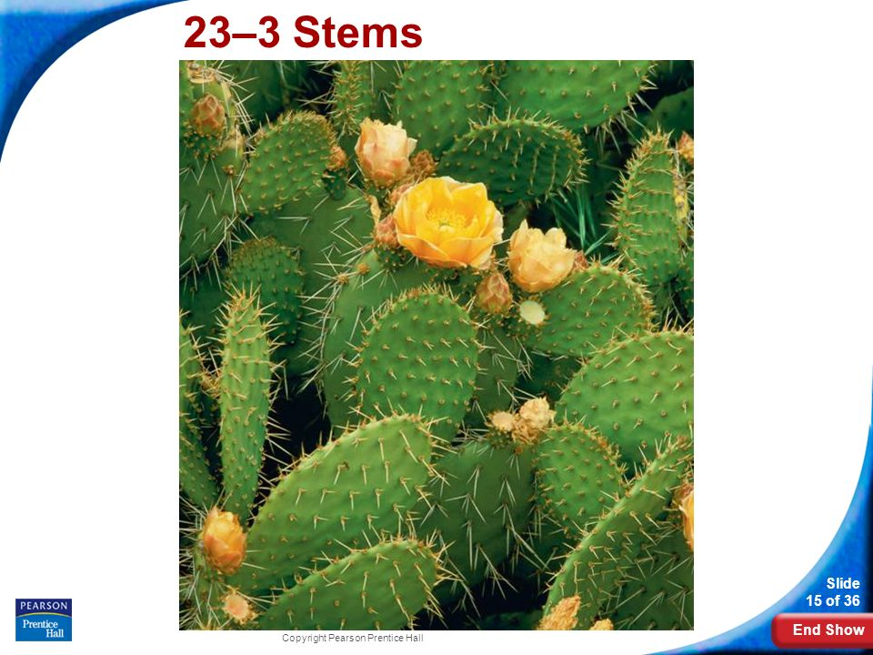 23–3 Stems Photo Credit: Getty Images Copyright Pearson Prentice Hall