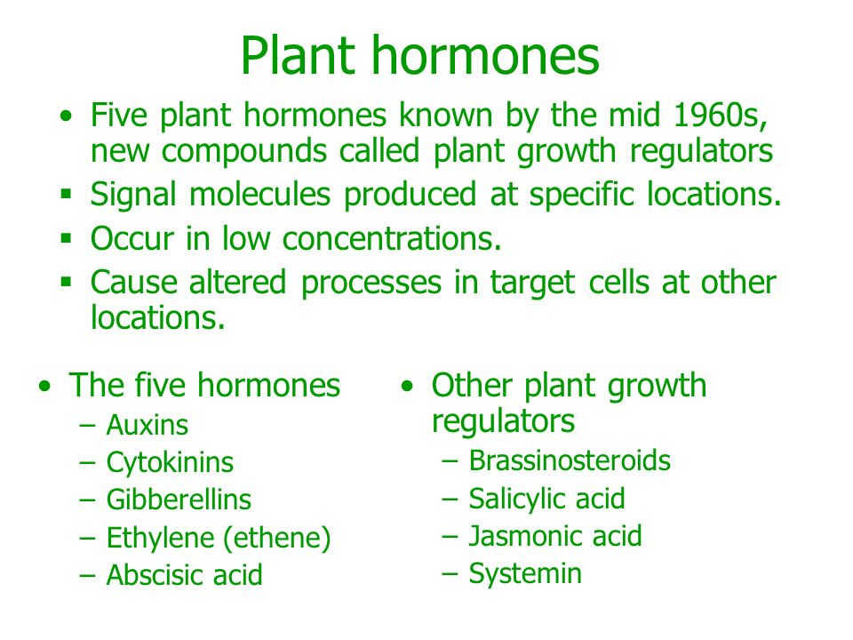 Plant sex hormones and ppt